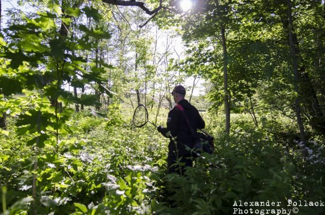 Mogge i skogen