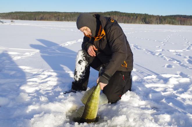 fiske 537