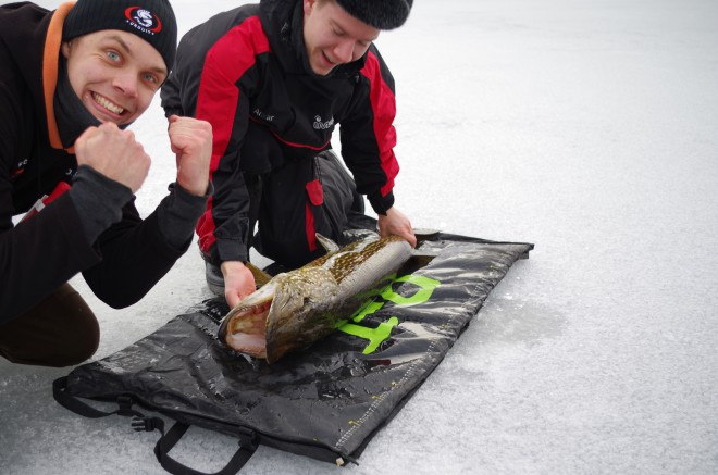 fiske 824